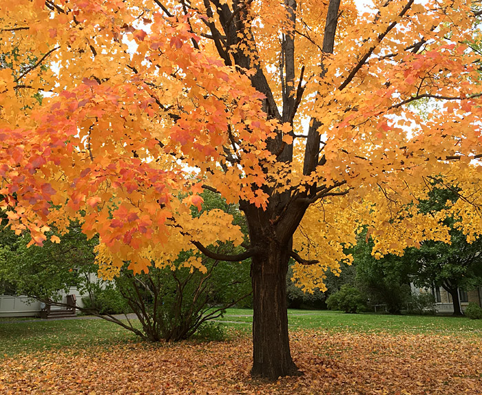 fall-tree-featured