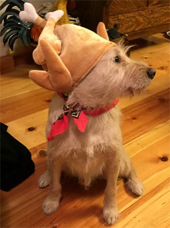 money pup thanksgiving