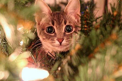 adopt a cat gift