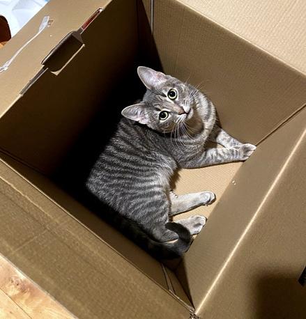 cat adoption fees