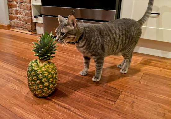 money meow pinapple