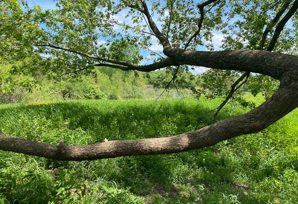 picnic branch