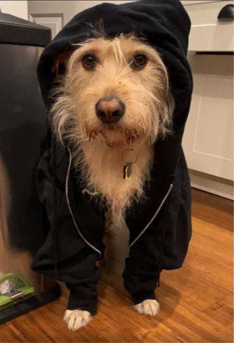 money pup hoodie