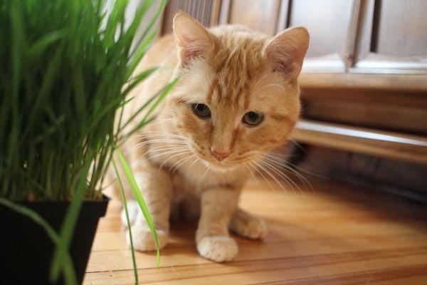 orange stray