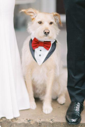 money pup wedding attire